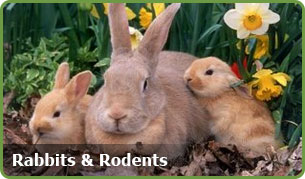 rodents rabbits
