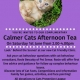 Calmer Cat Afternoon Tea